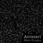 Accasari - «Mare Fungus»